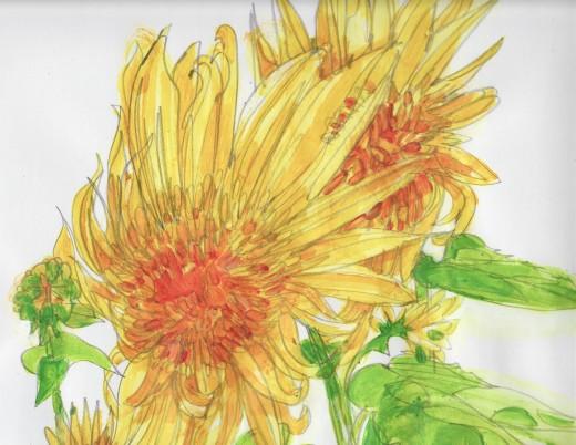 Teddy bear sunflowers[1034]